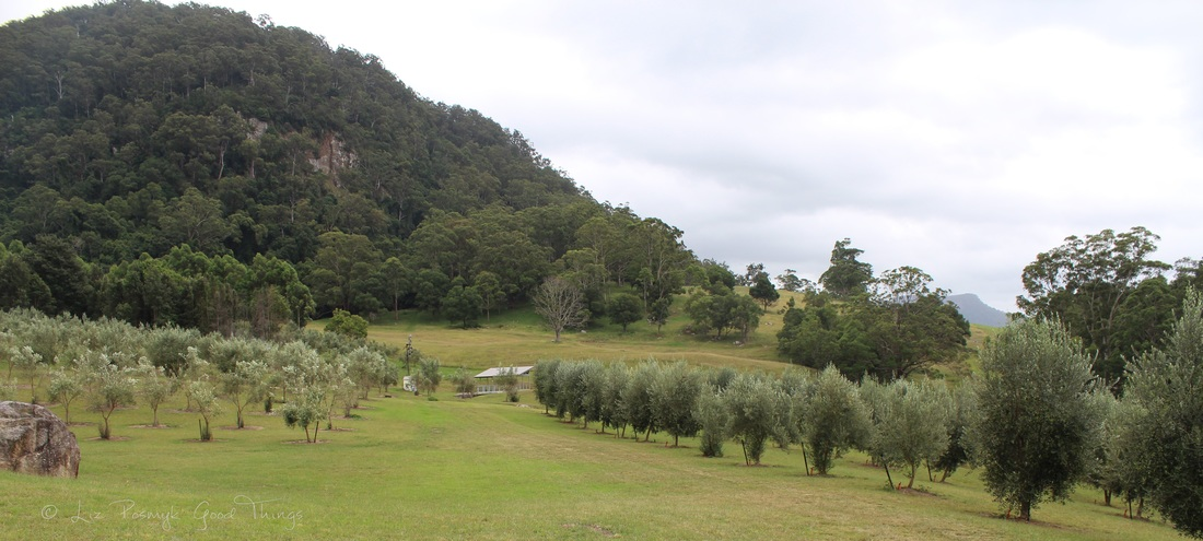 Wombat Ridge olive farm