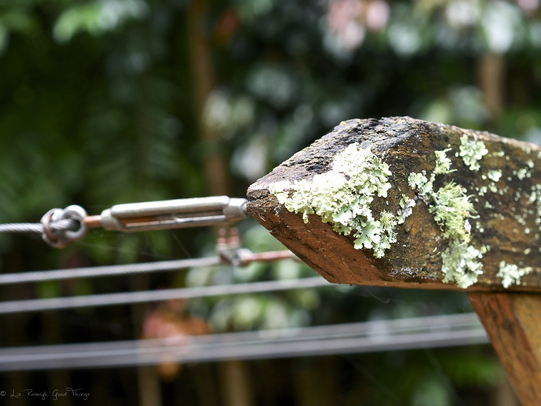 Lichen on the timber clothesline at Sahali