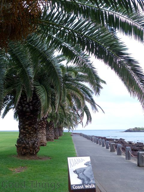 Palms along the harbour path at Kiama in NSW - Liz Posmyk Good Things