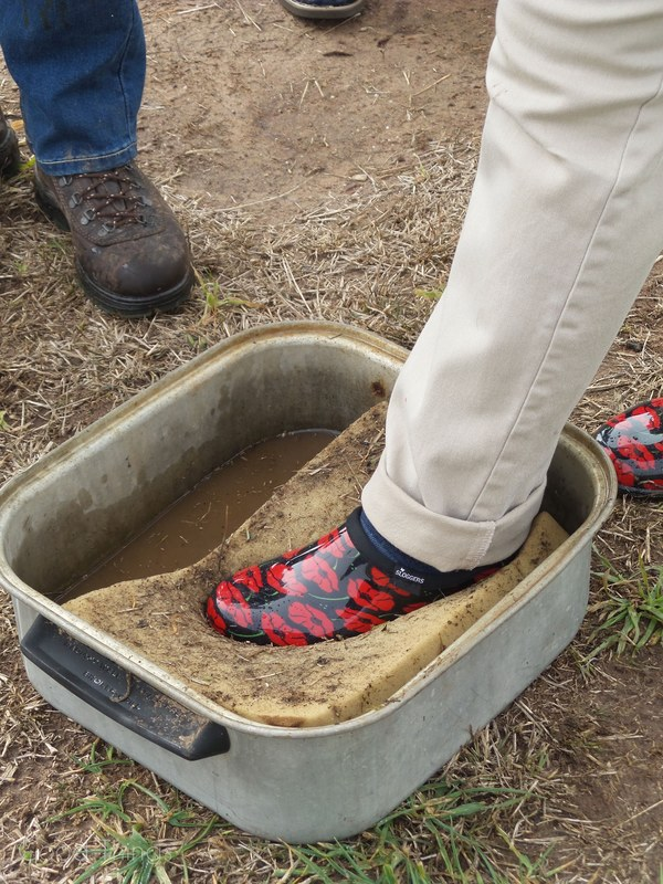 Foot bath at Turalla Truffles near Bungendore - photo Liz Posmyk, Good Things