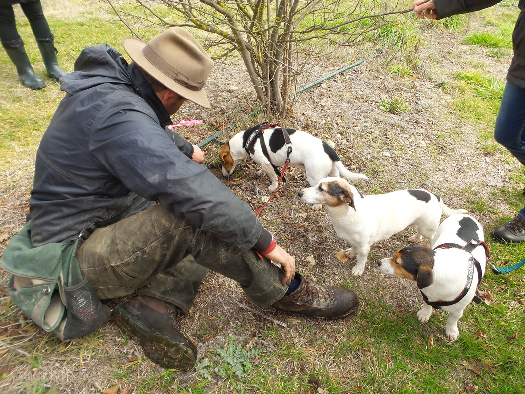 Damian Robinson with truffle dogs  at Turalla Truffles near Bungendore - photo Liz Posmyk, Good Things
