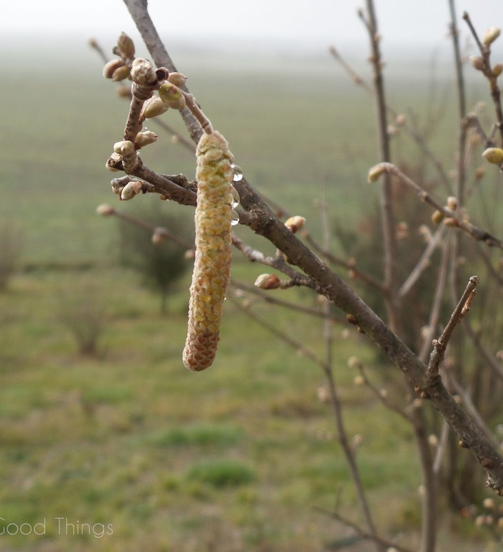 Dew drops on tree branches at Turalla Truffles near Bungendore - photo Liz Posmyk Good Things