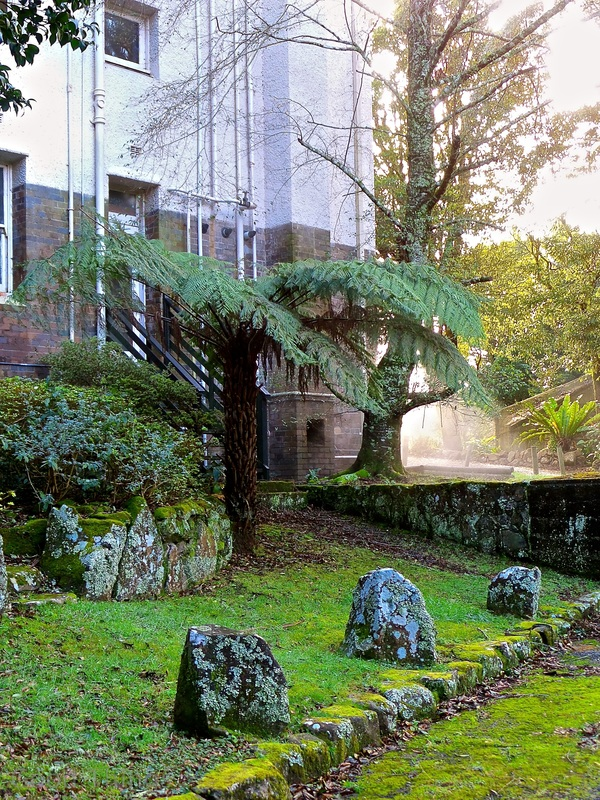 Mossy rocks and ferns in the gardens at the Robertson Hotel