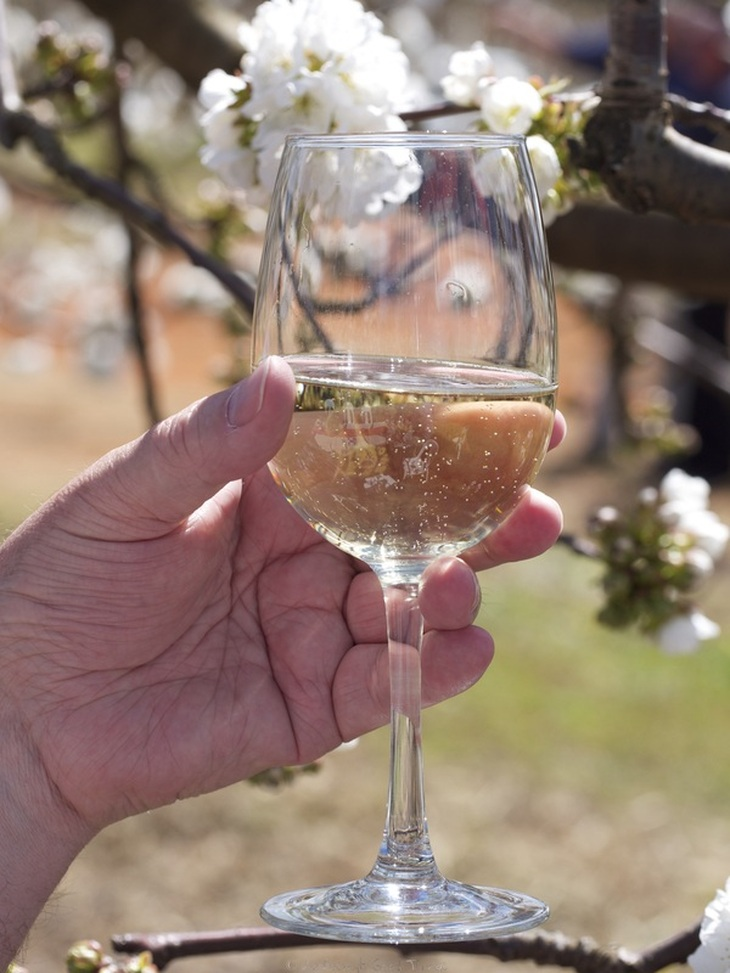 A glass of wine from the Hilltops Region, enjoyed in the cherry orchard