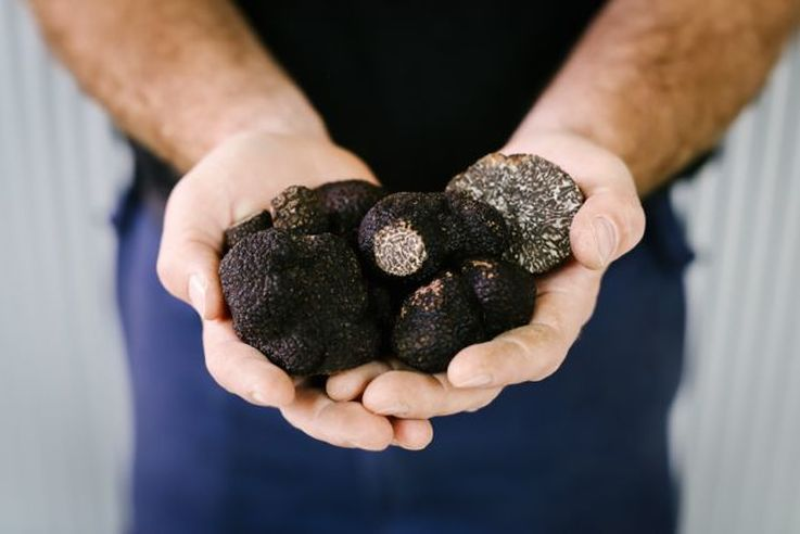 Truffles photo by Lean Timms @leanandmeadow