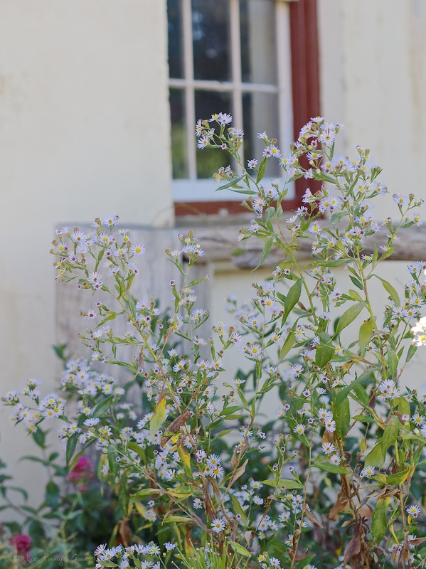 Cottage garden against the house at Cooma Cottage Yass - Liz Posmyk Good Things