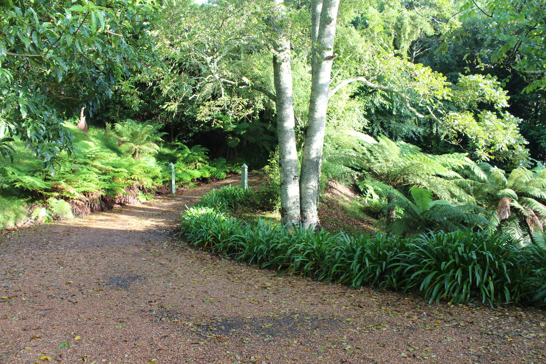 The lush rainforest and driveway at Sahali - a luxury self contained holiday home in the Kangaroo Valley New South Wales