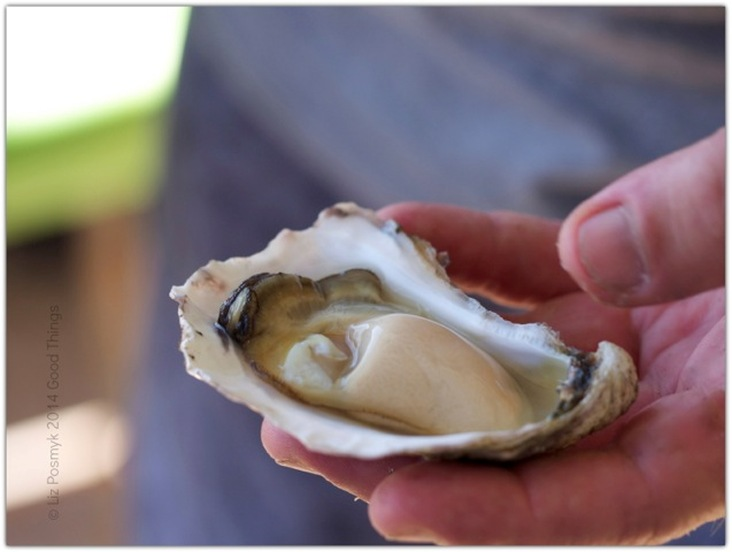 Creamy organic oyster from Wapengo Rocks by Liz Posmyk, Good Things