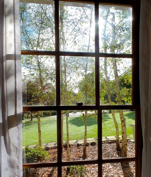 View to the Silver Birch and lawns from Garden Wing Room at Peppers Manor House - Photo Liz Posmyk Good Things