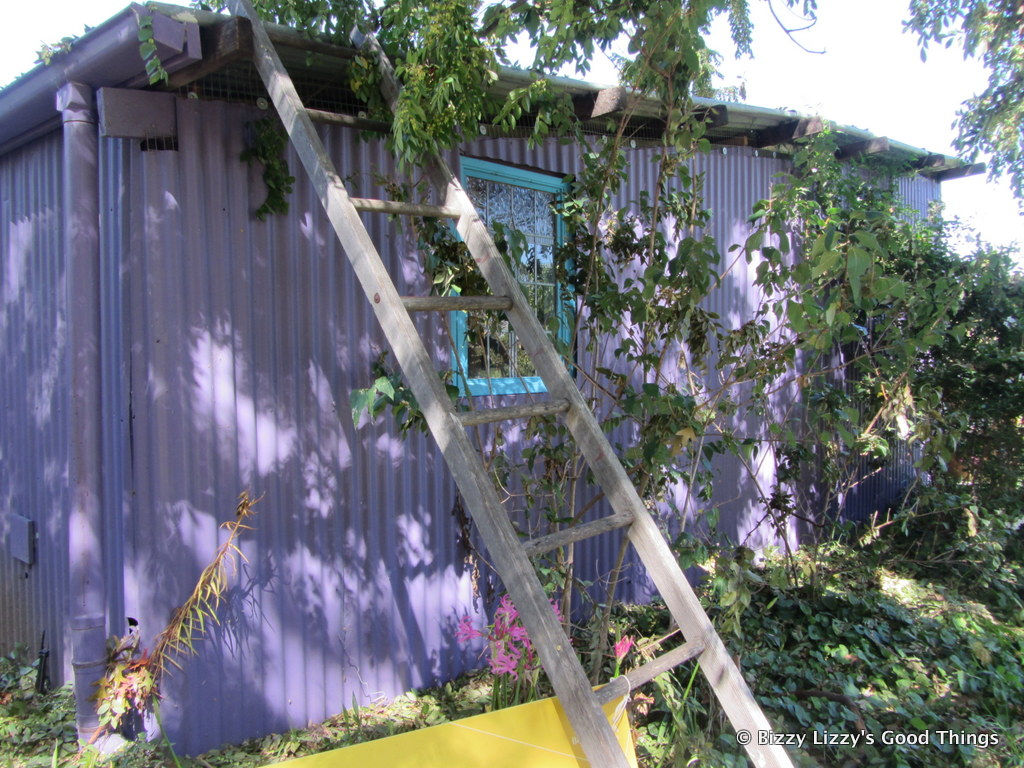 Ladder and shed in the apple orchard by Liz Posmyk Good Things