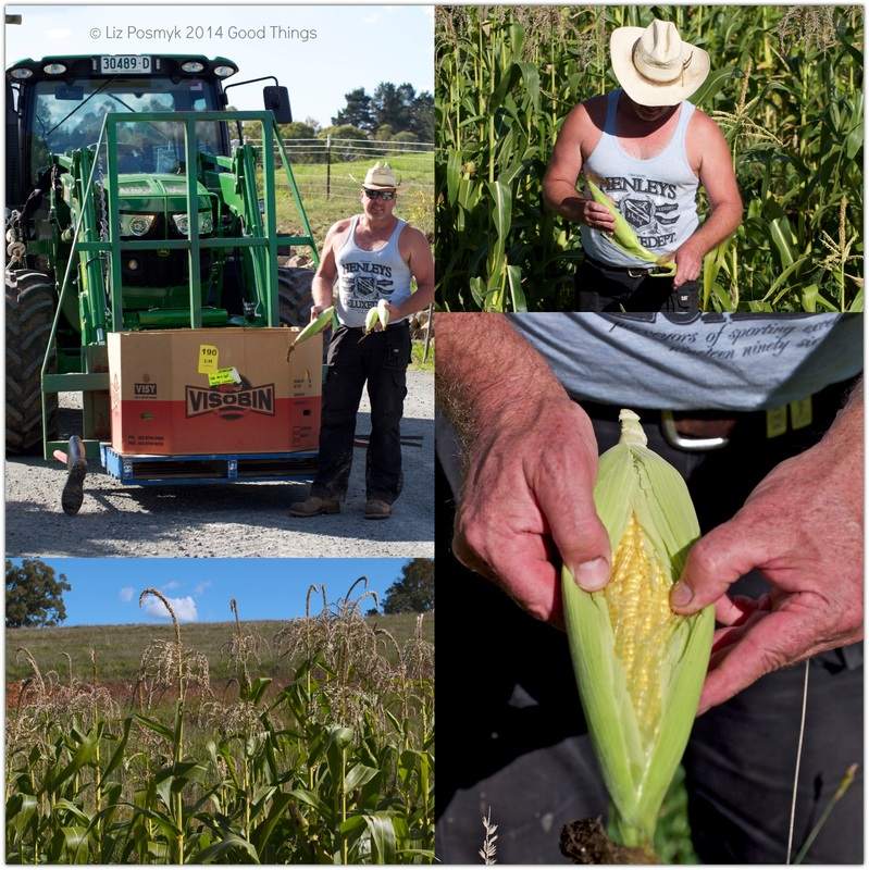 Picking corn with Robbie Wallace at The Henge by Liz Posmyk
