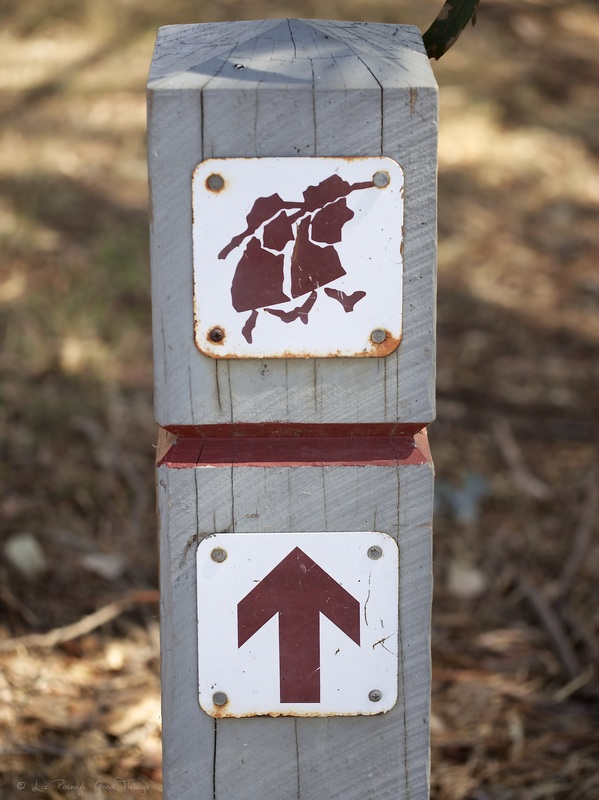 Walk this Way - Hume and Hovell walking track - Liz Posmyk Good Things