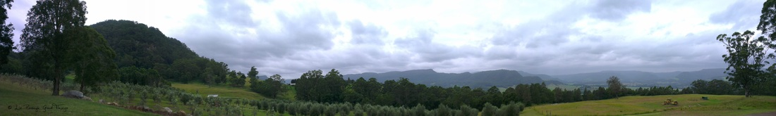 Panoramic view of Wombat Ridge olive grove