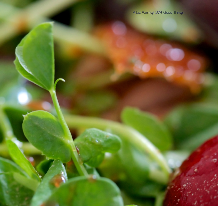 Vibrant greens and reds in this salad of cherries with roasted duck by Good Things