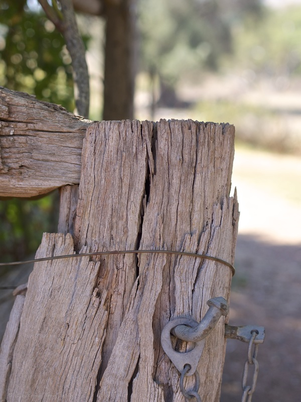 Fencing at Cooma Cottage - Liz Posmyk Good Things