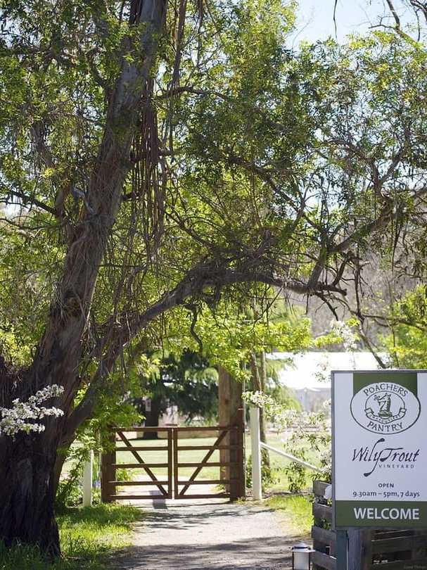 Poachers Pantry and Wily Trout Vineyard - Liz Posmyk Good Things