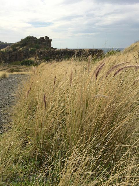 Grasslands looking to the quarry at Kiama - Liz Posmyk Good Things