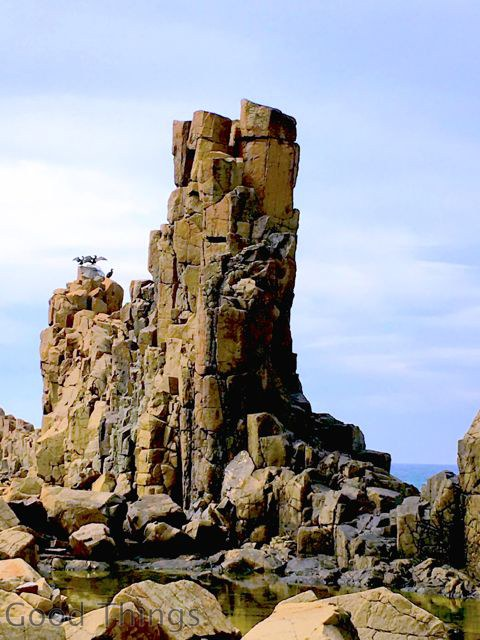 Waterbirds on the rock formations at Kiama in NSW - Liz Posmyk Good Things