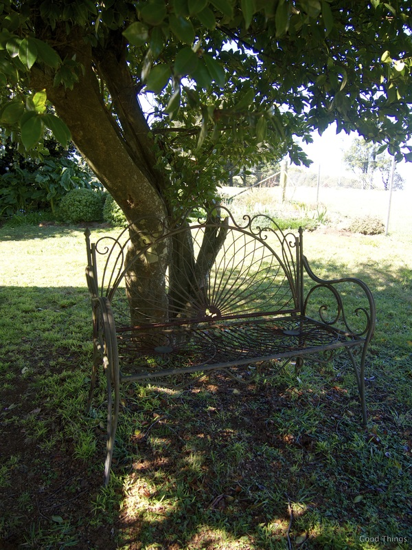 Wrought iron chair under a tall camellia t Laurel View farm stay in the NSW Southern Highlands by Liz Posmyk Good Things